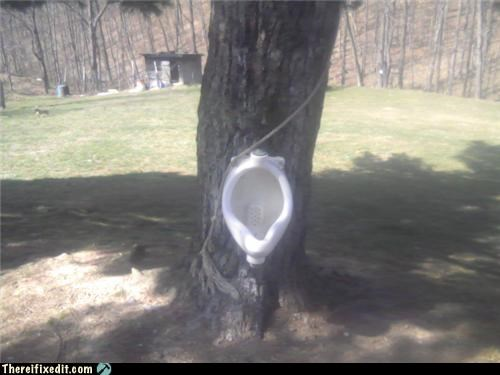bathroom,nature,plubming,trees,urinal
