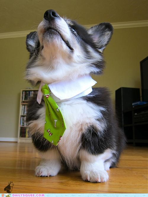 advice,boston terrier,bow tie,boxer,bulldog,cavalier king charles,corgi,employment,Hall of Fame,Jack Russell,job hunting,poodle,puppies,puppy,tie,ties,tips