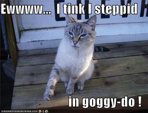 Ewwww...  I tink I steppid    in goggy-do !