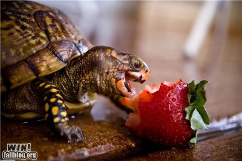 Mother Nature FTW: Turtles Likes Snacks