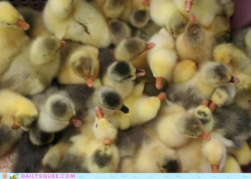 A Dance Floor Full of Chicks