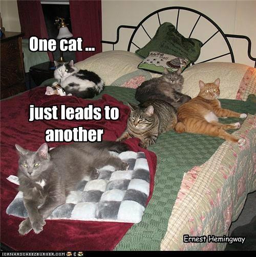Cat Quotes #12