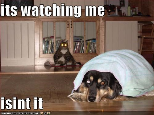 afraid,cat,german shepherd,hiding,question,watching