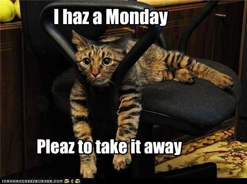 I haz a Monday