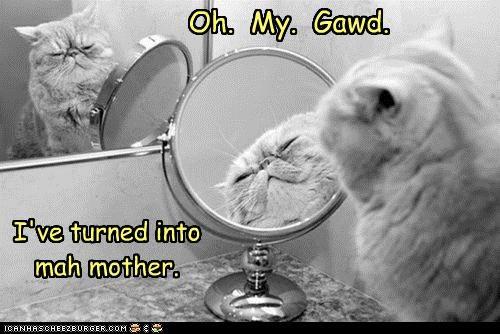 caption,captioned,cat,do not want,epiphany,horrified,into,mother,oh my god,realization,revelation,transformation,turned