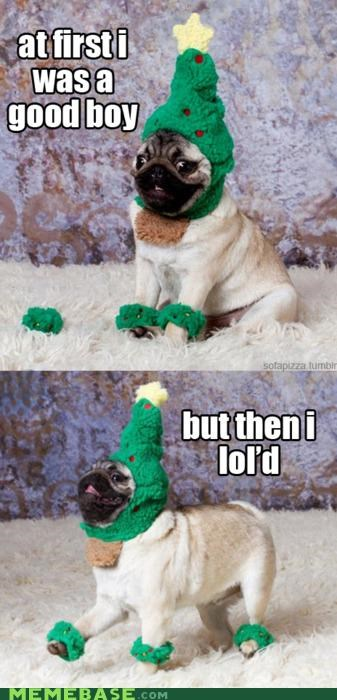 animemes,christmas,good boy,hat,lol,Memes,pug
