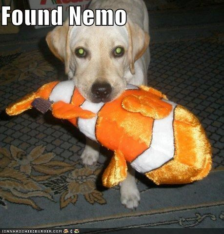 finding,finding nemo,fish,found,labrador,NEMO,stuffed animal,toy