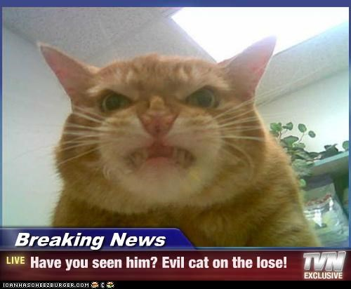 Breaking News - Have you seen him? Evil cat on the lose!