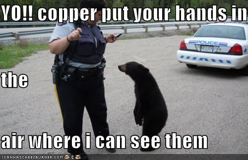 YO!! copper put your hands in  the  air where i can see them