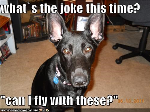 """what`s the joke this time?  """"can I fly with these?"""""""