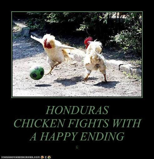 HONDURAS CHICKEN FIGHTS WITH A HAPPY ENDING