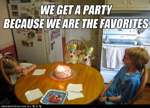 birthday,cake,corgis,favorites,hats,Party