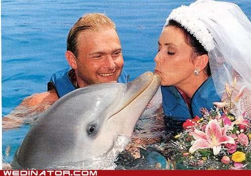 bride,dolphin,funny wedding photos,KISS