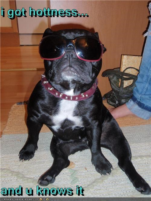 got,hot,hotness,i has,know,mixed breed,pug,sunglasses,you