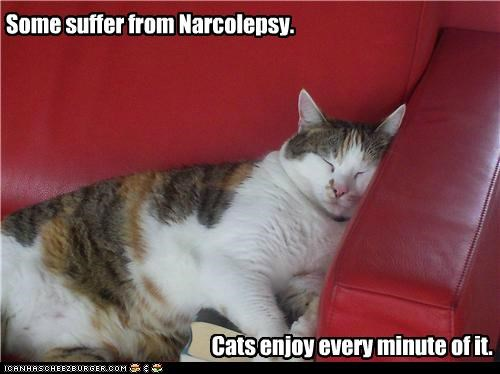 by contrast,caption,captioned,cat,Cats,contrary,do want,enjoy,every,minute,narcolepsy,sleeping,some,suffer