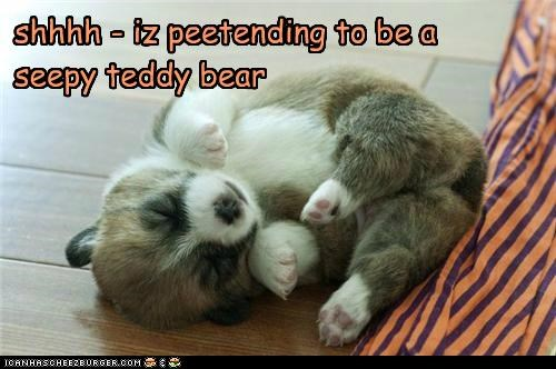 shhhh - iz peetending to be a seepy teddy bear