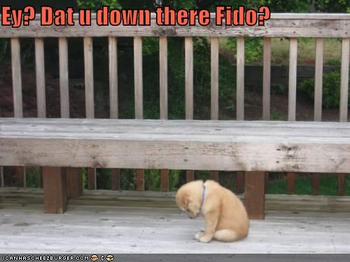 Ey? Dat u down there Fido?