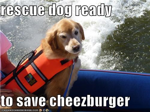 rescue dog ready  to save cheezburger