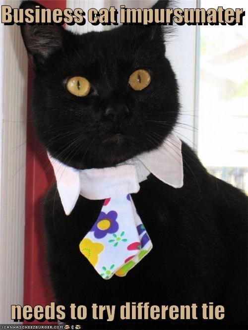 Business cat impursunater  needs to try different tie