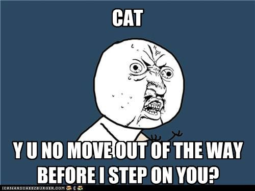 animals,cat,move,ouch,pets,step,Y U No Guy