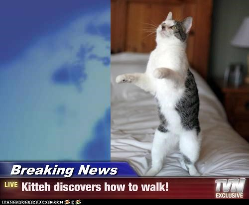 Breaking News - Kitteh discovers how to walk!