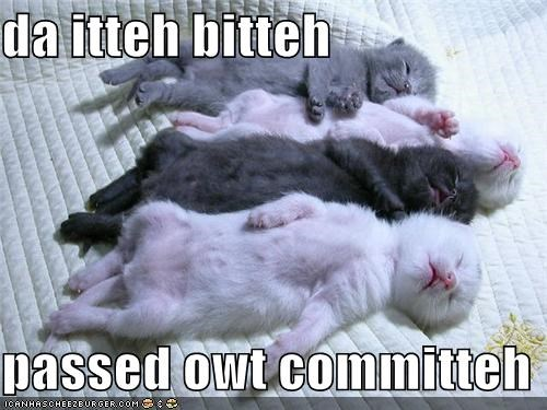 asleep,caption,captioned,cat,Cats,Hall of Fame,itteh bitteh kitteh committeh,kitten,passed out,sleeping