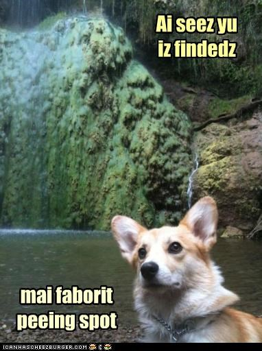 corgi,favorite,found,location,peeing,spot,waterfall