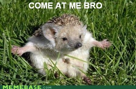 bro,come at me,hedgehog,Memes,sonic,video games