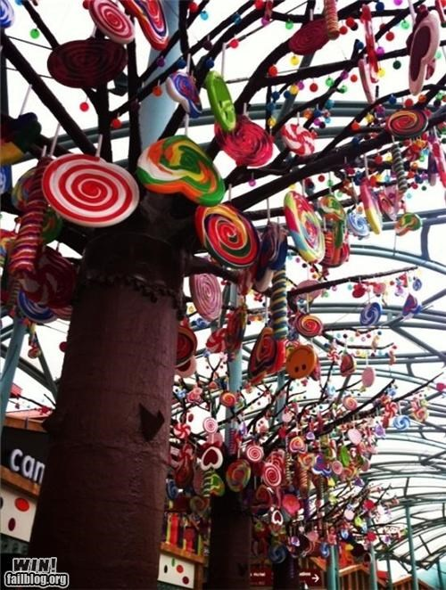 candy,delicious,trees,Willy Wonka