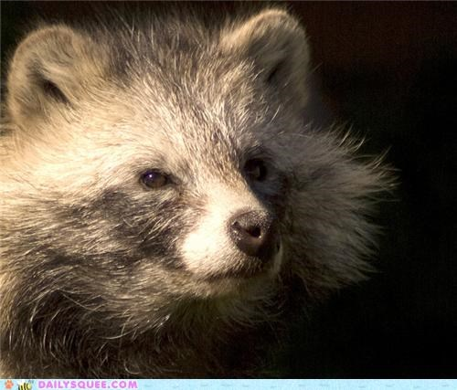 conclusion,end,lost,plans,squee spree,tanuki,thinking,thought,weekend,work