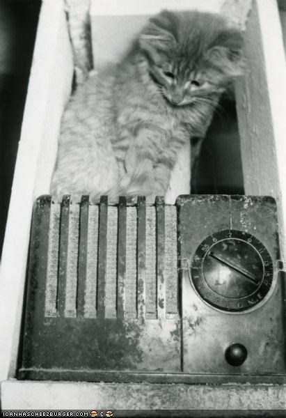 31 Photos of Cats Throughout History