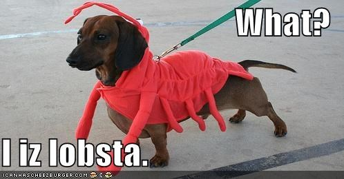 What?  I iz lobsta.