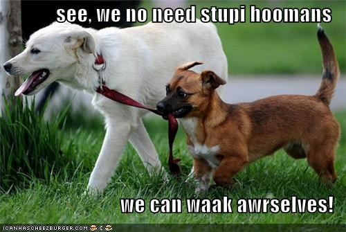 DIY,do it yourself,humans,jack russell terrier,labrador,leash,mixed breed,no need,walk,walking