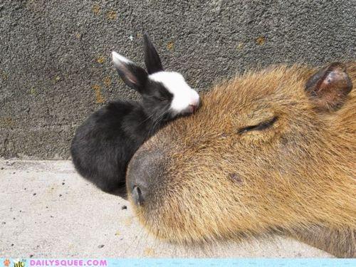 Bunday,bunny,capybara,cuddling,equation,Hall of Fame,happy bunday,math,mathematics,Meltdown,rabbit,sleeping