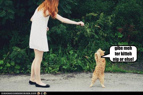 punk cat 2