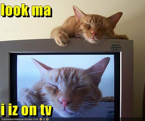 caption,captioned,cat,double meaning,literalism,on,pun,tabby,television,TV