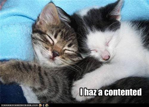 I haz a contented
