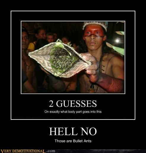 ants,eww,hell no,hilarious,wtf