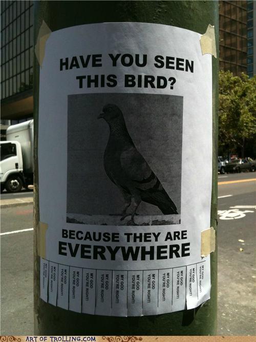 birds,everywhere,IRL,pigeons