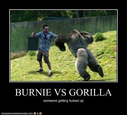BURNIE VS GORILLA