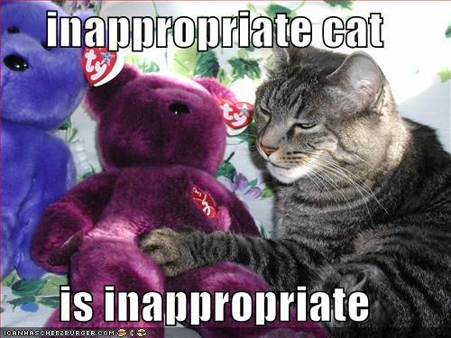inappropriate cat  is inappropriate