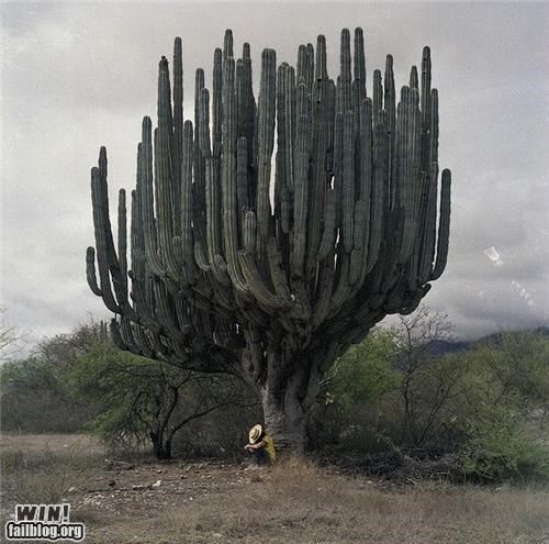 Mother Nature FTW: Giant Saguaro WIN