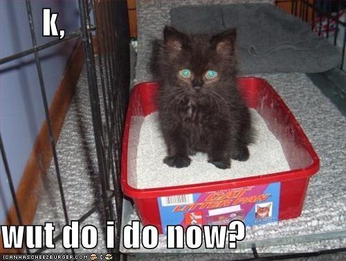 k,  wut do i do now?