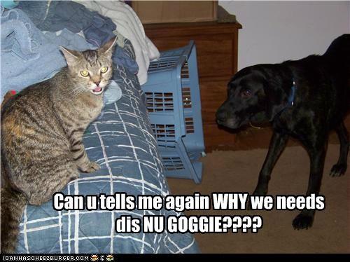 Can u tells me again WHY we needs dis NU GOGGIE????