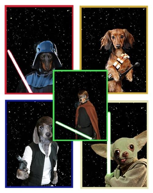 Star Wars Dogs of the Day