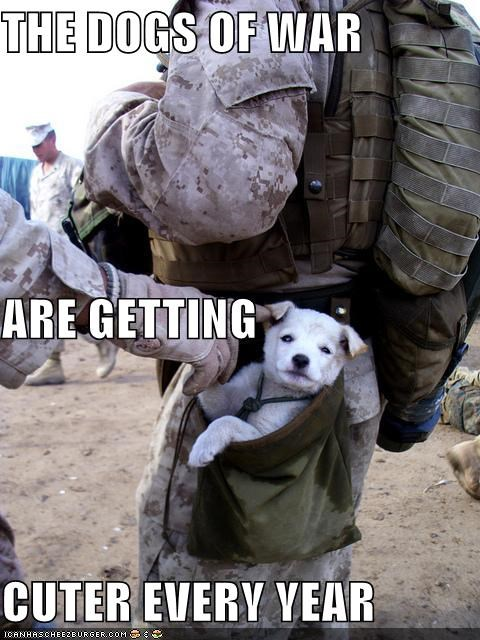 THE DOGS OF WAR ARE GETTING CUTER EVERY YEAR