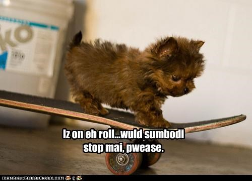 norwich terrier,puppy,roll,skate,skateboard
