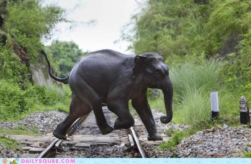 Acting Like Animals: Why Did the Elephant Cross the Road?