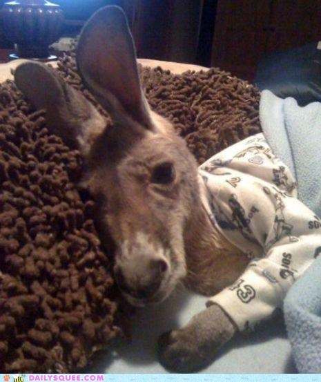 baby,explanation,Hall of Fame,Joey,kangaroo,pajamas,unnecessary,worth 1000 words