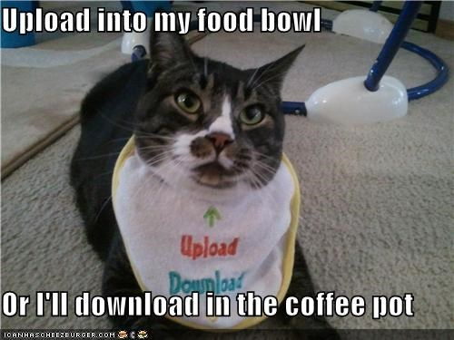 bib,caption,captioned,cat,double meaning,download,insinuating,request,subtlety,threat,upload
